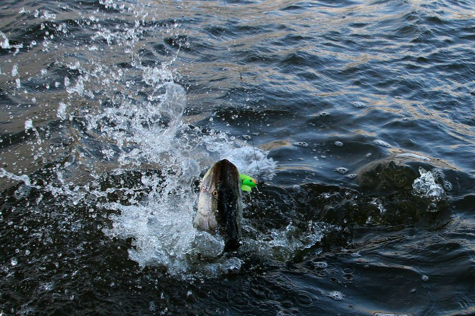 рыбалка на оби томская область: