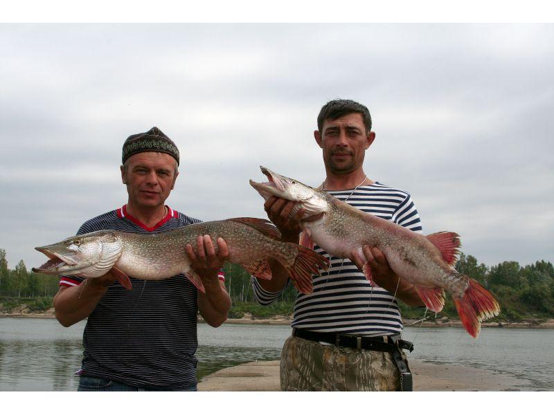 Щучья рыбалка в томской области
